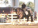 Available on DVD No.9<br>PRCS Professional Riders Clinic Symposium<br>Hubertus Schmidt<br>Assisting<br>Oded Shimoni<br>Jim Brandon<br>Equestrian Center<br>Wellington Florida<br>Duration: 24 minutes