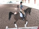 USDF Trainers Conference<br>Day2<br>Henk van Bergen<br> Assisting<br> Silke Rembracz<br> Gladiator<br> 12 yrs. old Gelding<br> Argentinian Warmblood<br> Owner: Mindy Elgart<br> Duration: 53 minutes