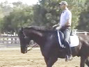 USDF APPROVED University Accreditation Steffen Peters Riding & Lecturing LaszloKWPN12 yrs. old Gelding Duration 31 Minutes