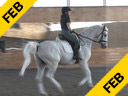 Markus Gribbe<br> Assisting<br> Tania Seymour<br> Fidertanz<br> Rheinlander<br> by: Fidemark 1<br> 9 yrs. old Stallion<br> Training: PSG<br> Owner: Bockmann Pherde<br> Duration: 15 minutes