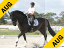 Jeremy Steinberg Assisting Jill Whitehead Trump KWPN 9 yrs. old Gelding Training: 4th Level Owner: Jill Whitehead Duration: 47 minutes