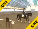 Shannon Dueck<br> Riding & Lecturing<br> Question<br> 8 yrs. Old Gelding<br> Oldenburg<br> by: Quarter Back<br> Training: 3rd Level<br> Duration: 39 minutes