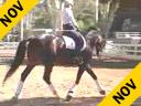 Mette Rosencrantz<br>Riding & Lecturing<br>Rockefeller<br>Swedish Warmblood<br>by:De La Gargie<br>6 yrs.old<br>Training: 1st Level<br>Owner: Mette Rosencrantz<br>Duration: 30 minutes