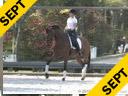 Betsy Steiner<br> Assisting<br> Lisa Ferguson<br> Calon<br> Welsh Sport Horse<br> 6 yrs. old Gelding<br> Training: 2nd Level<br> Owner: Lisa Ferguson<br> Duration: 34 minutes