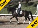 Mette Rosencrantz<br>Riding & Lecturing<br>Rockafeller<br>Swedish Warmblood<br>7 yrs. old<br>Training: 3rd Level<br>Duration: 33 minutes