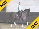 Michael Klimke<br> Riding & Lecturing<br> Fleshman<br> by: Florestan<br> 9 yrs. old Gelding<br> Owner:<br>Manuela Klimke<br> Training: 1-1 Level<br> Duration: 27 minutes