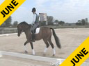 Jan Brons<br> Riding & Lecturing<br> Zonneglans<br> 4 yrs old Gelding<br> KWPN<br> Training: USEF Developing Horse<br>Owner: Prentiss Partners<br>Duration: 29 minutes