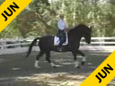 Mette Rosencrantz<br>Riding & Lecturing<br>Taison<br>KWPN Gelding<br>Owner: Mette Rosencrantz<br>7 yrs. old <br>Training: 4th Level<br>Duration: 34 minutes