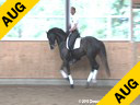 Hartwig Burfeind Riding & Lecturing Wunschtraumer 8 yrs. old Stallion by: White Star Training: PSG Level Owner: Pferd24 Duration: 26 minutes