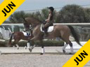 Kathy Connelly<br>Assisting<br>Jane Karol<br>Nibbit<br>KWPN <br>12 yrs. old Gelding<br>Training: Grand Prix<br>Duration: 34 minutes