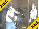 Sal Salvetti<br> & Jane Hannigan<br> Discussion on<br> Massage Therapy<br> for Dressage Horses<br> Part 2 of Three Parts<br> Duration:36 minutes