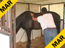 Available on DVD No.15<br>Sal Salvetti<br> Techniques of<br> Massage Therapy<br> For Dressage Horses<br> KWPN<br> 9yrs, old<br>  Training:PSG<br> Duration:45 minutes