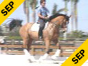 Kathy Connelly<br> Assisting<br> Ryan Yap<br> Orion<br> KWPN<br> 10 yrs.old Gelding<br> Training:Prix St George<br> Duration: 21 minutes