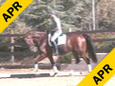 Volker Brommann<br> Riding & Lecturing<br> Optimist<br> 10 yrs. old Gelding<br> KWPN<br> Training: 4th Level<br> Duration: 36 minutes