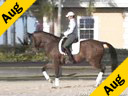 USDF APPROVED<br> University Accreditation<br> Steffen Peters<br>Assisting<br>Ilse Schwarz<br>Cadenza<br>by: Contango<br>10 yrs.old Oldenburg Gelding<br>Training: PSG<br>Duration:36 minutes