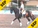 USDF APPROVED<br> University Accreditation<br> Available on DVD No.2<br>Steffen Peters<br> Riding & Lecturing<br> Marlando<br> KWPN<br> 10 yrs old<br> Training: Grand Prix<br> Duration: 30 minutes