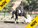 USDF APPROVED University Accreditation Available on DVD No.43Steffen Peters Riding & Lecturing Magic WeltinoWestfalian 8 yrs. old Gelding Training: PSG/I1 Owner: Jen & Bruce Hlavacek Duration: 39 min