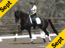 Available on DVD No.38<br>Elizabeth Ball<br>Riding &  Lecturing<br>Selton HW<br> by:Sandro Hit<br>Hanoverian<br>5 yrs. old Gelding<br>Training: FEI  Level<br>Duration: 40 minutes