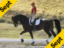USDF APPROVED University Accreditation Steffen PetersRiding & LecturingRavel11 yrs. old KWPNby: ContangoTraining: Grand PrixDuration: 33 minutes