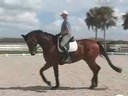 Available on DVD No.30<br>Volker Brommann<br>Riding & Lecturing<br>Farino<br>Owner: Charmayne O'Harrah<br>Westfalen Gelding<br>8 yrs. old<br>Training: 4th Level<br>Duration: 39 minutes