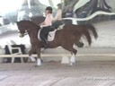 USDF West Coast Trainers Conference<br> Day 1<br> Stephen Clarke<br> Assisting<br> Claire McNulty<br> Reel Adventure<br> 14 yrs. Old Gelding<br> Hanoverian<br> by:  Rotspon<br> Owner:  Dr. Kristy Lund<br> Duration: 30 minutes