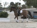 Pam Goodrich Riding & Lecturing Pascal Danish Warmblood 8 yrs. old  Gelding By: Schwadroneur Training: 3rd Level