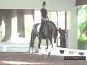 USDF APPROVED<br>University Accreditation<br>USDF Trainers Conference<br> Day 2<br> Steffen Peters<br> Assisting<br> Lauren Sprieser<br> Stratocaster<br> Oldenburg<br> 5 yrs. Old Gelding<br> by: Sir Donnerhall<br> Duration: 26 minutes