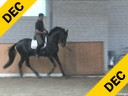 Markus Gribbe<br> Riding & Lecturing<br> Dr. Doolittle<br> Hanoverian<br> by: Donnerhall<br> 12 yrs. old Stallion<br> Training: GP<br> Owner: Klatte Stallions<br> Duration: 20 minutes