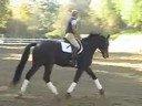 Mette Rosencrantz<br>Riding & Lecturing<br>Rockefeller<br>Swidish Warmblood<br>4 yrs. old Gelding<br>Training: Training Level 4<br>Duration: 32 minutes